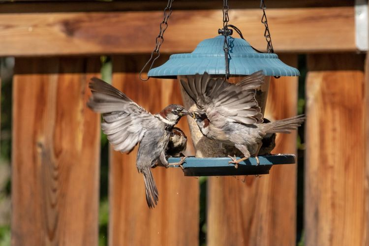 Full length of a bird flying over wooden post