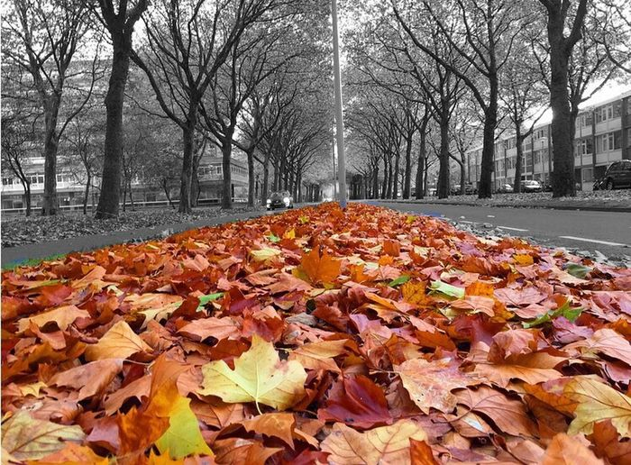 Iamsterdam Autumn Nature Leaf Beauty In Nature Outdoors Orange Color Fall 色鮮やか 秋 美しい Happy :) Tree Amsterdam 愛アムステルダム Netherlands ❤
