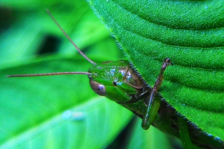 Macro Green Color One Animal Animal Themes Insect Animals In The Wild Close-up Animal Wildlife Leaf Nature Outdoors Focus On Foreground