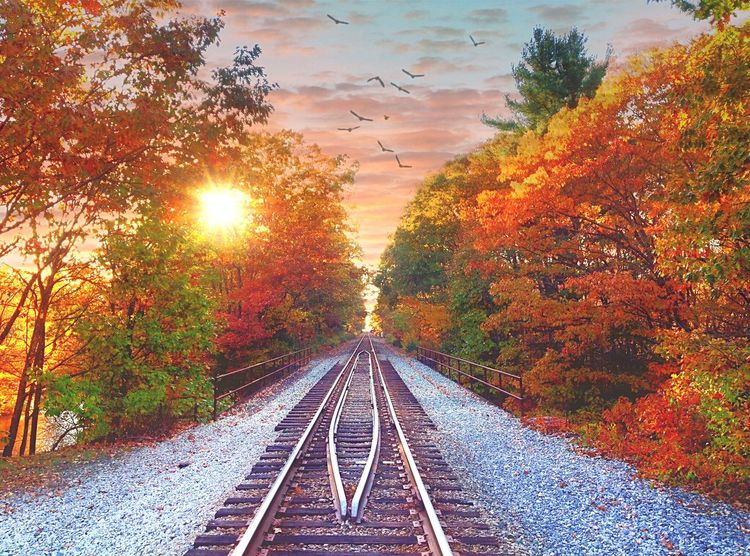 Autumn Sunset on the Railroad Tracks Autumn Transportation The Way Forward Railroad Track Change Tree Rail Transportation Diminishing Perspective Nature No People Beauty In Nature Outdoors Sunset Day Leaf Scenics Sky