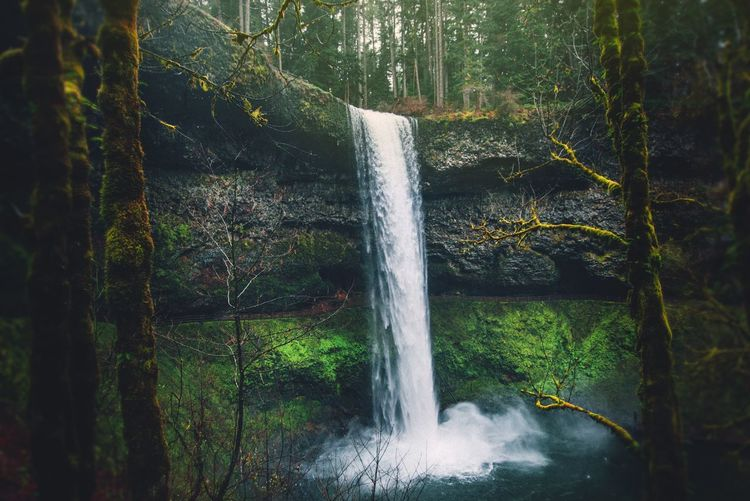Camping Adventure Oregon Nature Photography Explore Hike Water Motion Plant No People Nature Day Long Exposure Green Color Waterfall Spraying Growth Close-up Outdoors