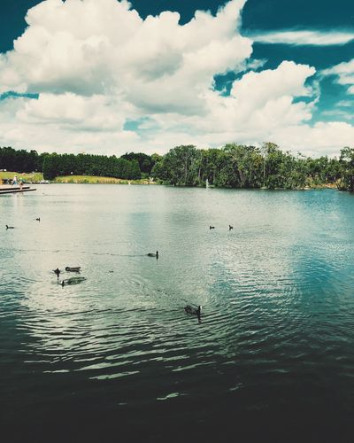 Lake wonderful Views Bluesky Colours Beauty In Nature EyeEm Gallery Picoftheday Photography Blue Water Sky Cloud - Sky Tree Nature Plant Lake Tranquility Tranquil Scene Beauty In Nature Scenics - Nature Day No People Group Of Animals Rippled Bird Outdoors Reflection Waterfront Vertebrate