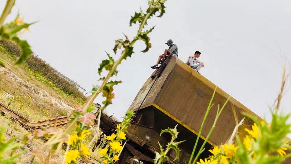 Plant Nature Day Sky Occupation Growth Agriculture Farm Outdoors Low Angle View Rural Scene People Food And Drink Land Green Color Men Working Landscape Gardening Plant Part