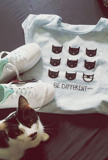 A Bird's Eye View bought the t-shirt and the shoes today as a little treat after handing in my last uni project. The Cat 's name is Chaplin
