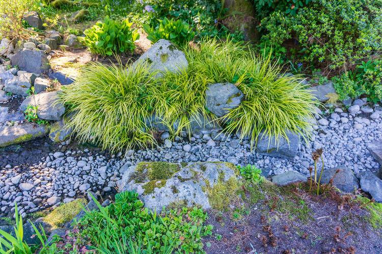 High angle view of cactus growing on rocks