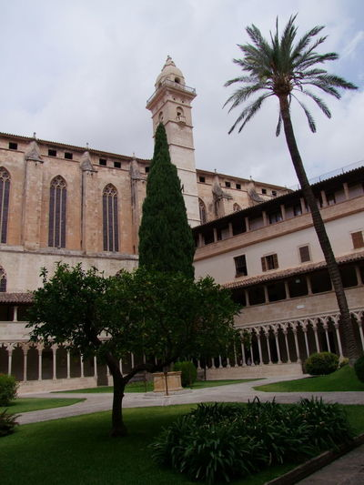 Cloister, Basilica de Sant Francese, Placa Sant Francese Basilica Church Composition Palm Tree Palma Palma De Mallorca Place Of Worship Roman Catholic SPAIN Sunlight And Shade White Clouds Architecture Bell Tower Building Exterior Cedar Tree Cloister Full Frame History No People Outdoor Photography Place Of Prayer Religion Tower Tranquil Scene Tree