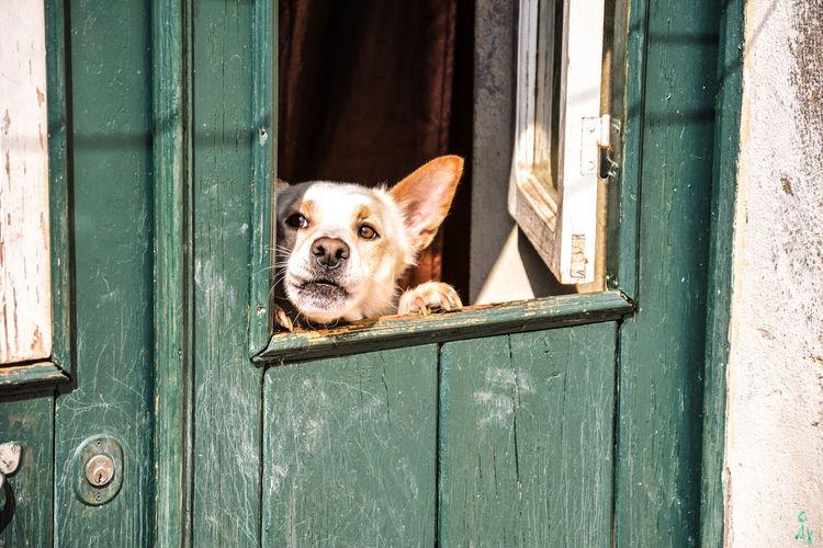 Portrait of dog peeking through door