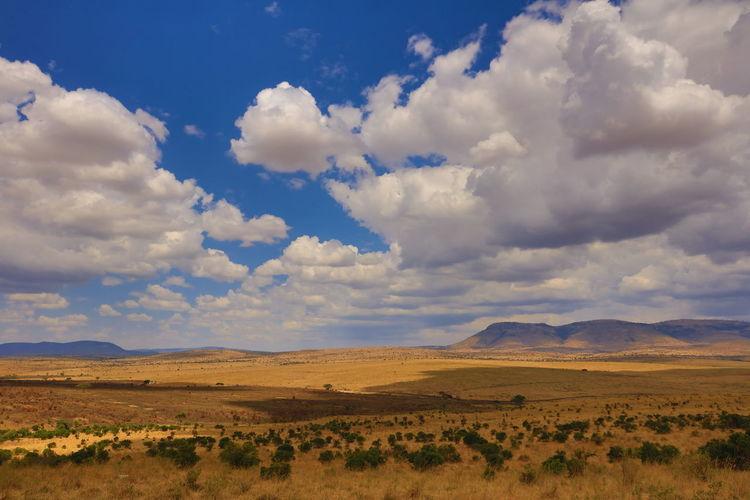 View at the Serengeti plains from Maasai Mara NP, Kenya Countryside Cumulus Cloud Endlessness Idyllic Landscape Maasai Land Maasai Mara Mountain National Parks Kenya National Parks Tanzania Remote Sand River Serengeti Serengeti National Park Solitude Tranquil Scene Tranquility Wideness Wildebeast Migration