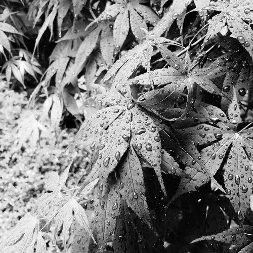 Blackandwhite Flower Rainly