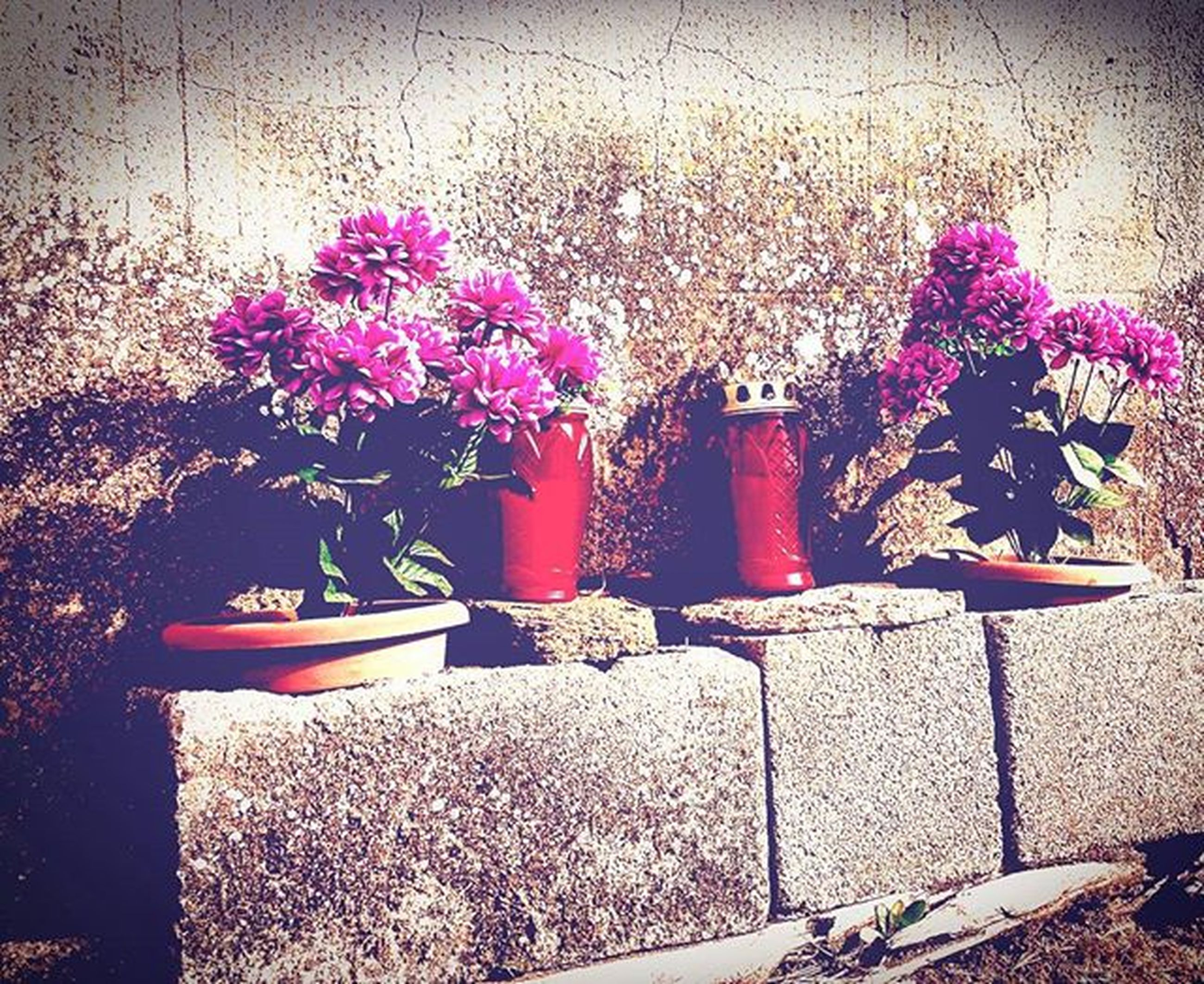 flower, potted plant, plant, growth, wall - building feature, fragility, flower pot, vase, freshness, petal, nature, pink color, wall, indoors, table, built structure, no people, beauty in nature, day, sunlight