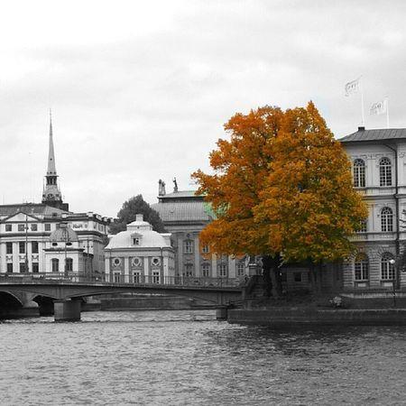 Allshots_ Aqua_gallery Autumn Treeworld wu_europe world_shots wu_sweden wu_sweden ig_sweden master_shots world_shots worldingram shawndalyphotography splendid_shots