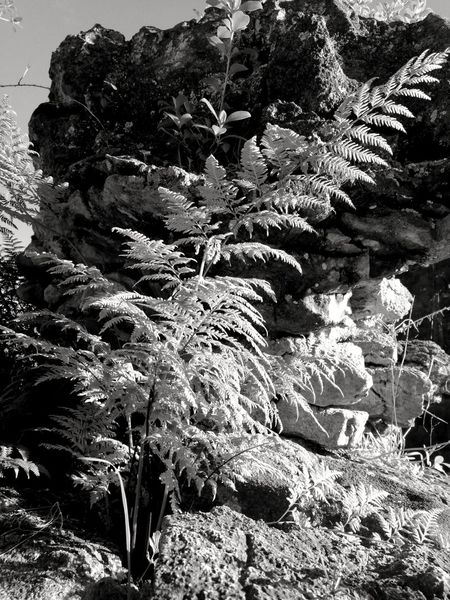 Beauty In Nature Black & White Day Nature No People Outdoors Plant Walking Around Perspectives On Nature Outdoor Photography Love Life Plants Thats Nature Blackandwhitephotography Close-up Playing Around With My Camera Outside