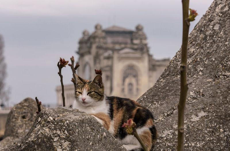 Cat looking at camera against sky