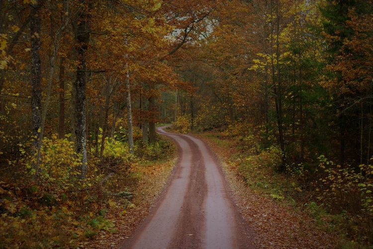 Country road amidst trees in forest during autumn