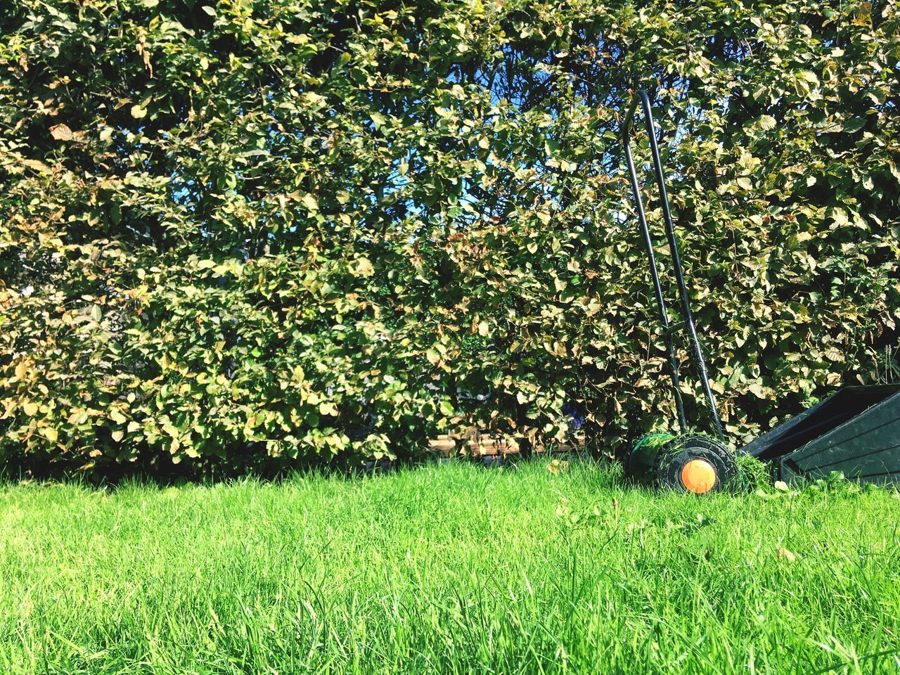 plant, green color, grass, growth, ball, nature, field, day, land, tree, no people, sport, outdoors, golf ball, beauty in nature, sunlight, sphere, golf, freshness, branch