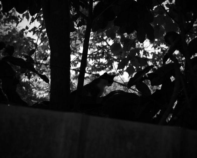 老舊眷村,是貓咪的樂園 Cat The View And The Spirit Of Taiwan 台灣景 台灣情 Landscape Travel Plant Nature One Animal Lying Down Mammal Tree Branch My Best Travel Photo