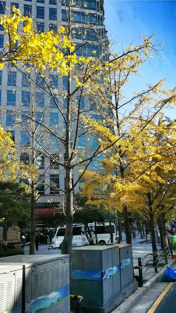 Colours Of Autumn Ginkgo Maidenhair Tree Seoul