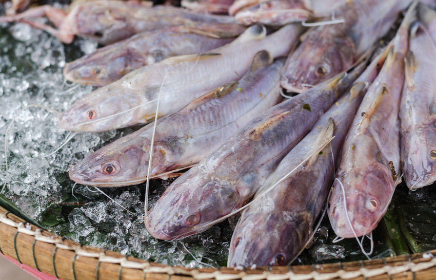 Fresh fish in the food market. Fish Without Scales Animal Fat Fish Fish Fish Market Fishery  Fishing Industry Food Food And Drink Food Preservation For Sale Freshness Freshwater Fish Market Nutritional Value Parasite Protein Food Raw Food Retail  Sale Still Life