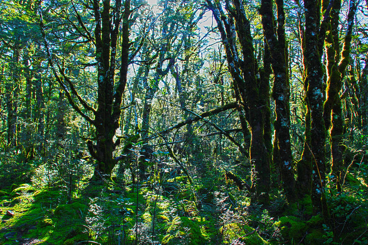Tree Green Color Growth Nature Low Angle View Full Frame Beauty In Nature Branch Forest Outdoors Tree Trunk Backgrounds Day No People Scenics Sky Freshness Light And Shadow Forestal Scenes Forest Photography Moss Light In The Forest Sun Sunbeams