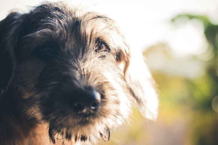 Dog in Sunlight