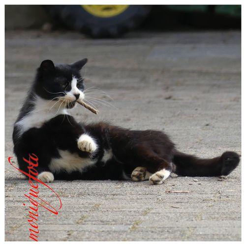 am Morgen ein Joint und der Tag ist dein Freund. 💕💗 Monique52 Miezekatze Katzenliebe Cat Domestic Cat Pets