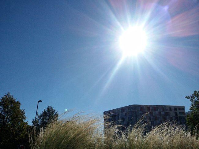 TakeoverContrast Sun Grass Vegetation Building Urban Nature Landscape Shining Against The Sun