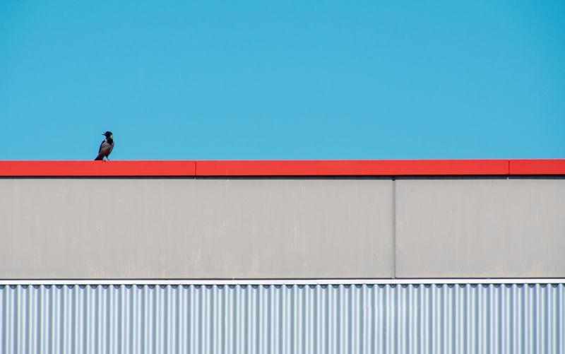 Man against wall against clear blue sky