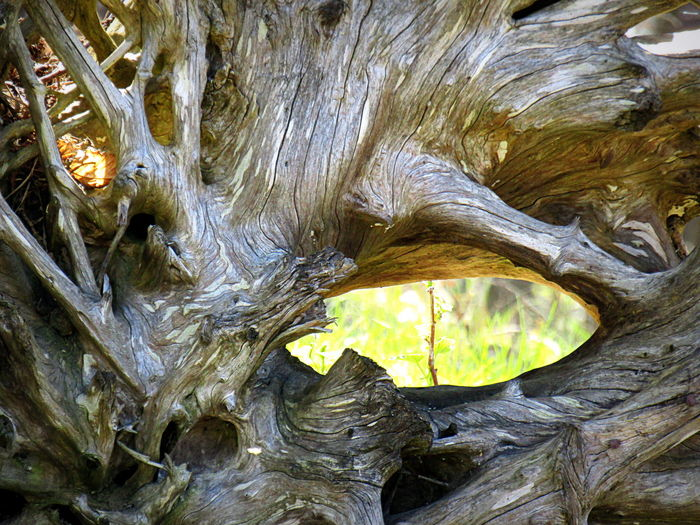 Beauty In Nature Close-up Das Auge Im Wurzelholz--heute 2017-- Outdoors The Eye In Rootwood