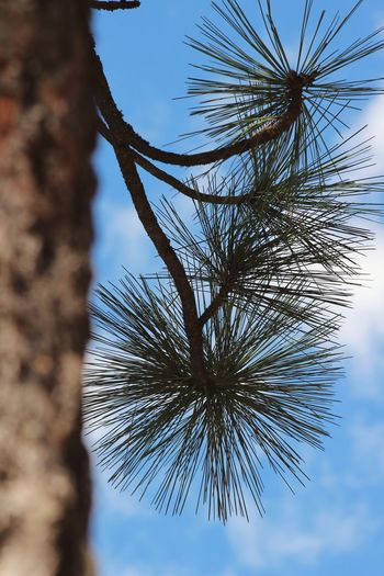 Pine Line Sky Tree Close-up Nature No People Outdoors Day Complexity Water Beauty In Nature