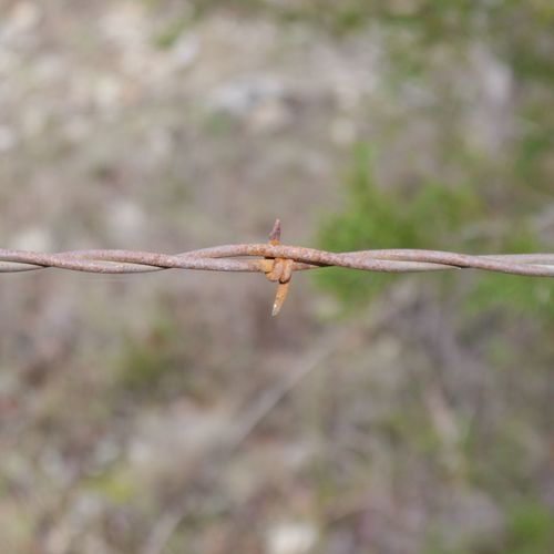 Focus On Foreground Barbed Wire Day Close-up Nature No People Outdoors