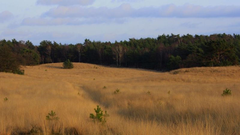 On the Veluwe