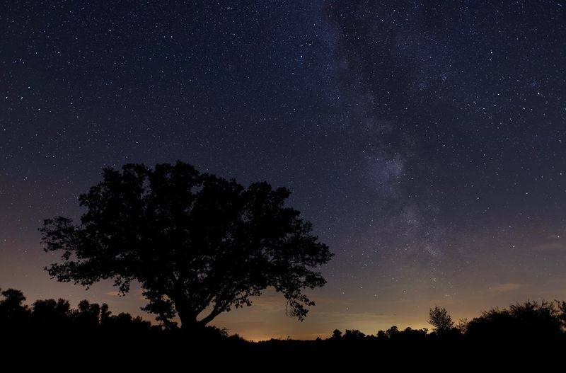 Milky Way Star - Space Astronomy Night Space Sky Tree Galaxy
