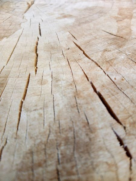 Wood EyeEm Selects Hardwood Backgrounds Wood Grain Tree Ring Textured  Serrated Wood - Material Timber Cracked Pattern