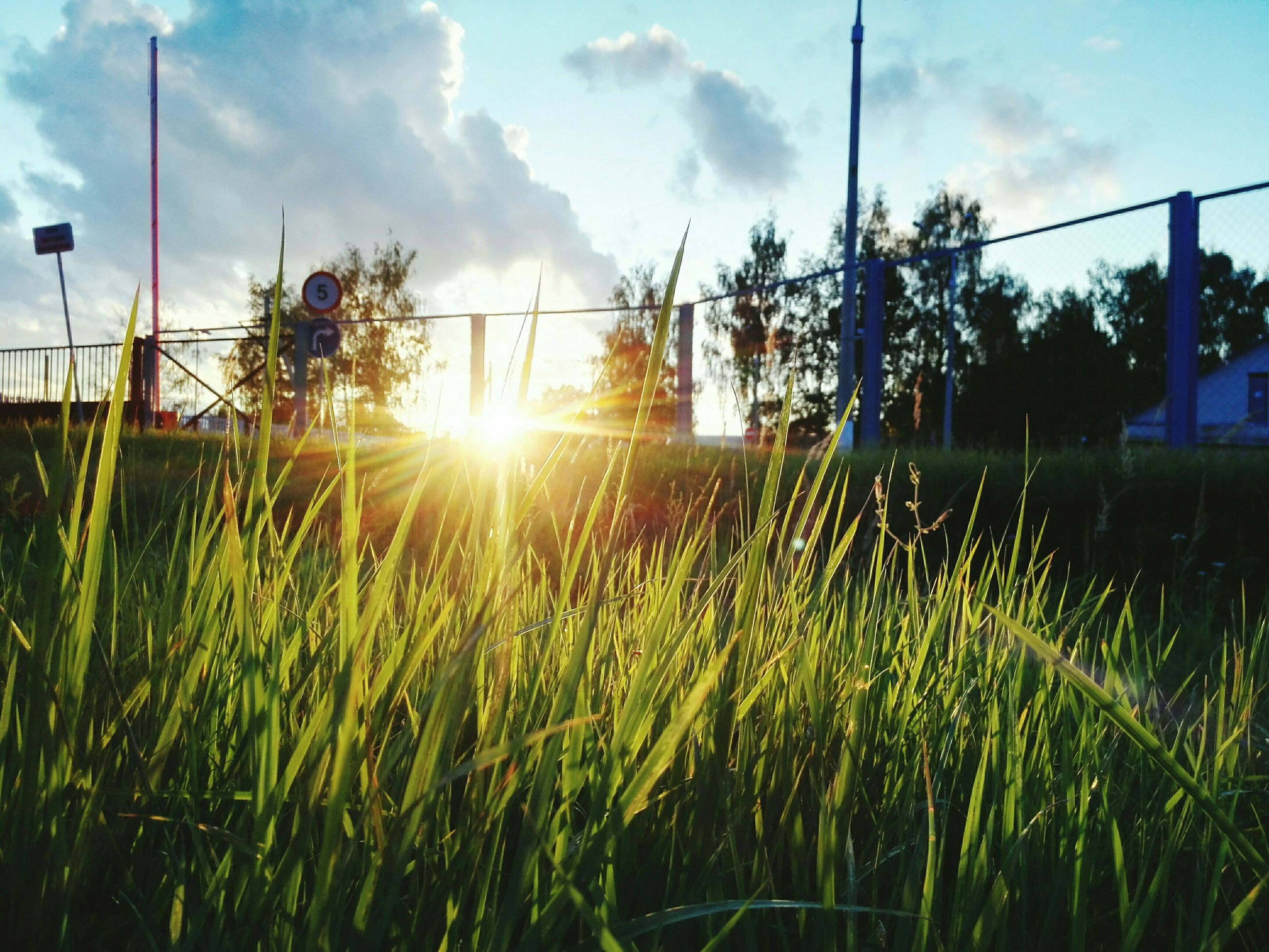 sun, sky, grass, field, growth, sunset, sunbeam, lens flare, sunlight, nature, plant, tranquility, beauty in nature, cloud - sky, tranquil scene, rural scene, landscape, scenics, green color, cloud