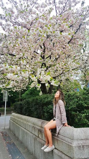 Woman sitting on cherry blossom