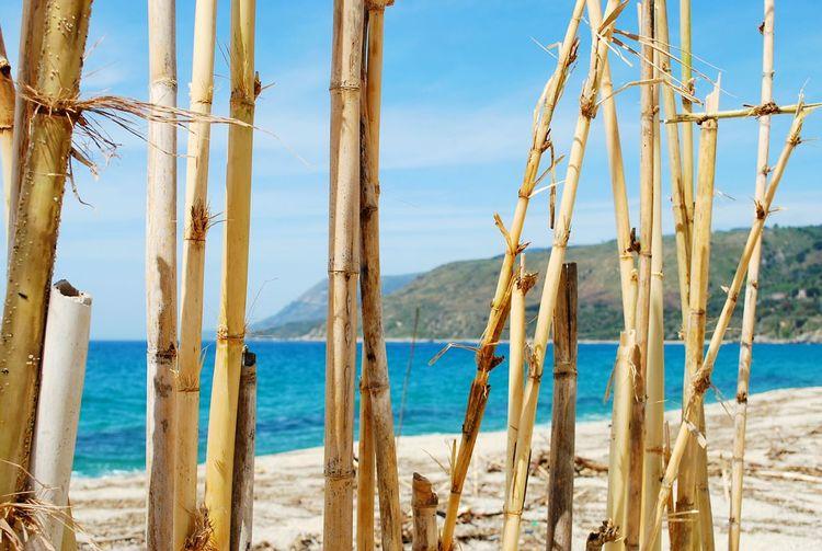 Damaged bamboos at beach against sky