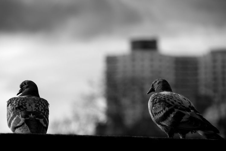 Close-Up Of Pigeons Perching In The City