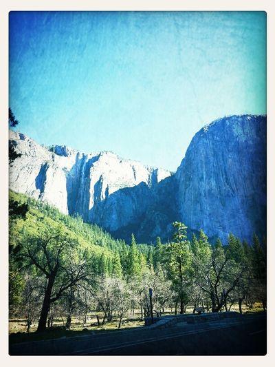 Animals Yosemite
