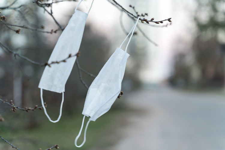 Close-up of white hanging on twig
