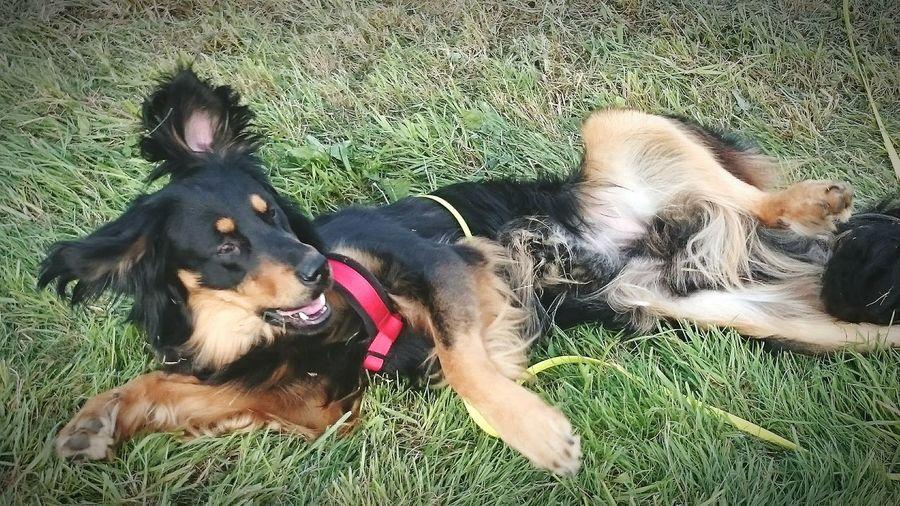 Herbst Hunde Tiere Dog Walking Wald Waldspaziergang Enjoying Life Spielen