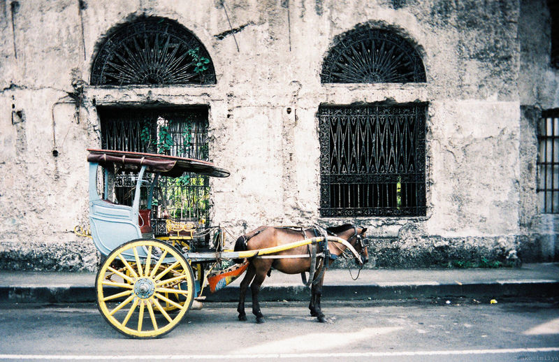 kalesa Film Film Photography Filmisnotdead Film Nostalgia Nostalgic  Window Windows Historical Building Philippines Filipino Culture Kalesa Travel Focus On The Story Horse Cart Horsedrawn Carriage Horse Architecture Built Structure Building Exterior Window Frame EyeEmNewHere
