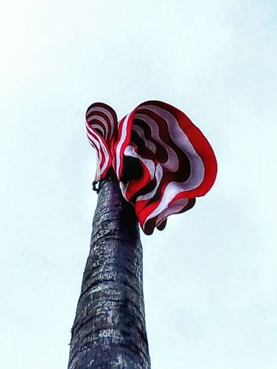 Red No People Nature Day Outdoors Sky Flag Pole USA FLAG Different Perspective