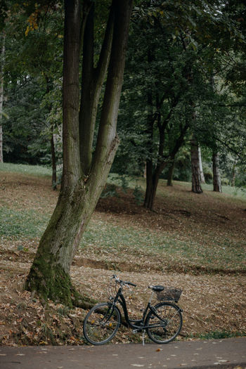 Bicycle on tree trunk in park