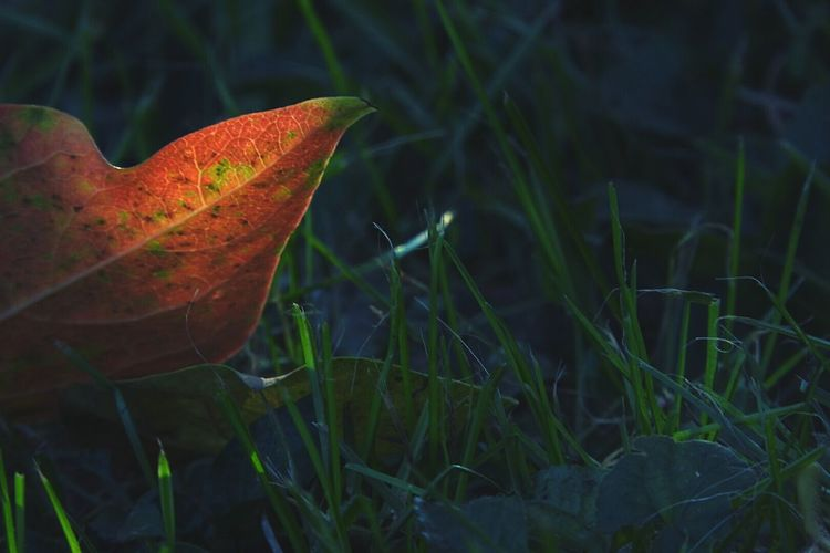 Leaves Nature