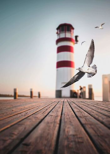 Light tower Bird Lighttower Nature See Gull Coast EyeEmNewHere Focus On The Story