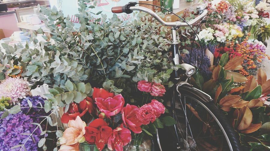 Bicycle Exhibition Present Orange Color Bright Vegetable Colorful Farmer Market Flower Flower Head Choice Retail  Variation Multi Colored Flower Market Valentine Day - Holiday Flower Shop Bouquet Flower Arrangement Peony  Marigold For Sale Florist Retail Display Market Stall Stall Price Tag Bunch Of Flowers Display A New Beginning