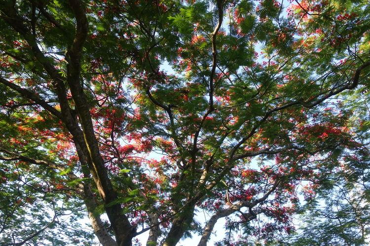 Tree Branch Flower Backgrounds Full Frame Sky