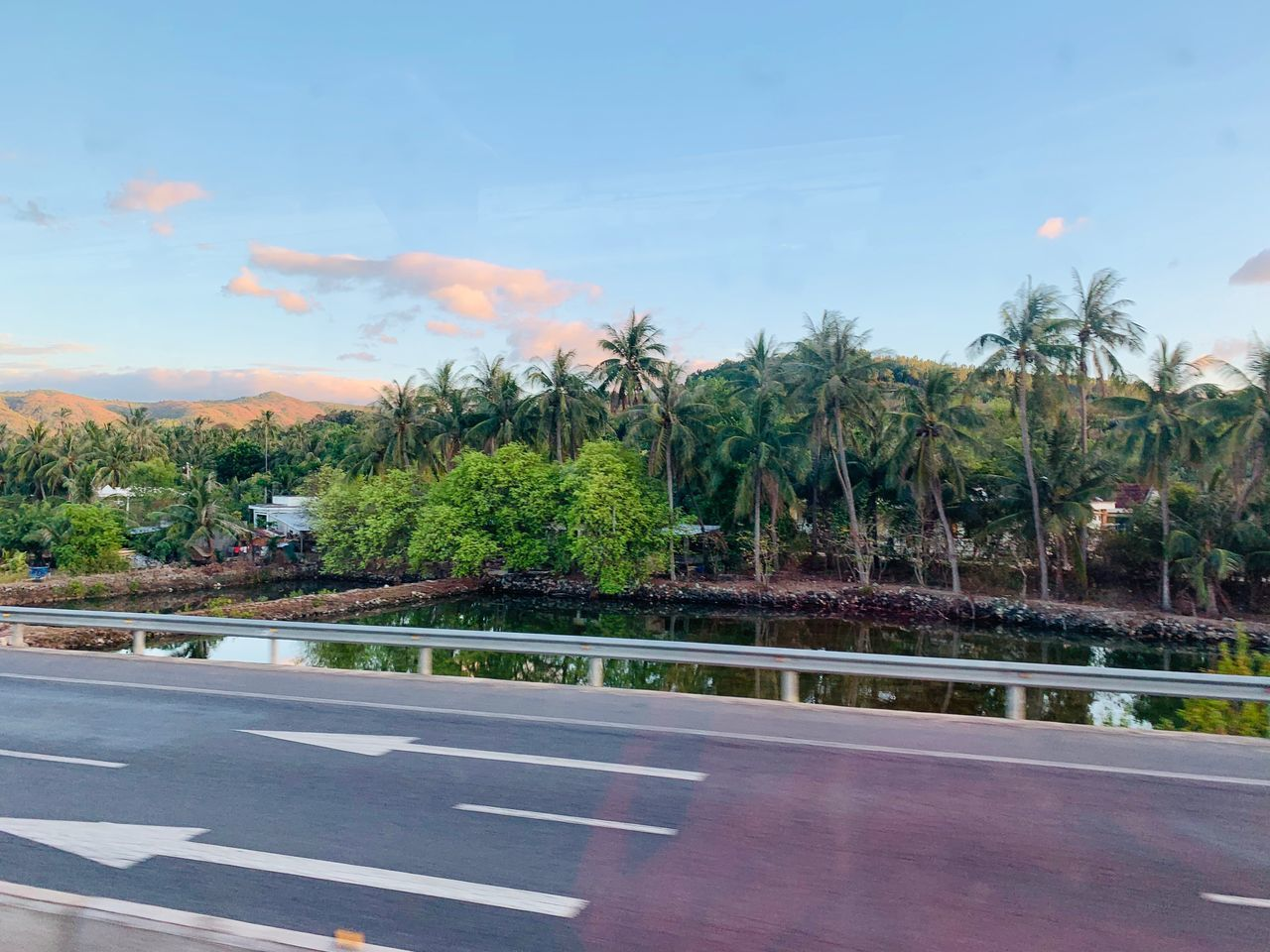 tree, plant, sky, nature, road, symbol, no people, cloud - sky, transportation, marking, road marking, growth, palm tree, outdoors, day, tropical climate, sign, land, green color, city