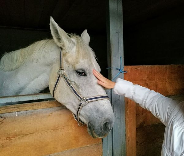 Midsection of woman touching horse in stable