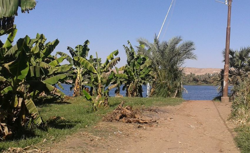 Beauty In Nature Clear Sky Egypt Nature No People Outdoors The Nile River Tree
